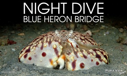 AUGUST NIGHT DIVES