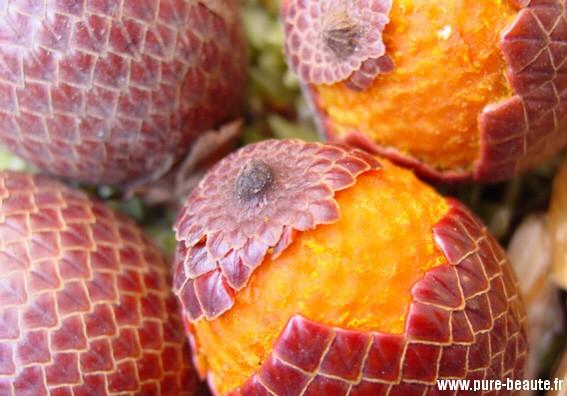 Buriti_frutos
