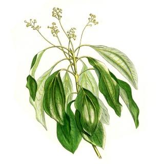 Ho-Blätter - Aromatherapy Spray - 15ml