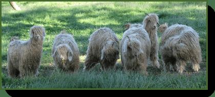 environmental-grazing