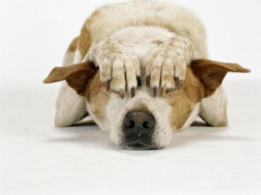 Angst en Essentiële Oliën bij Honden