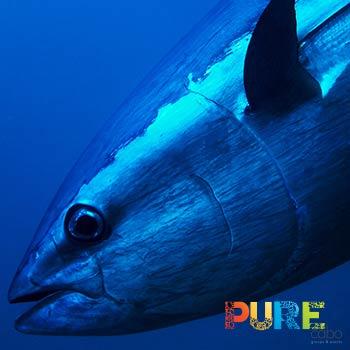 Cabo Sport Fishing Tuna