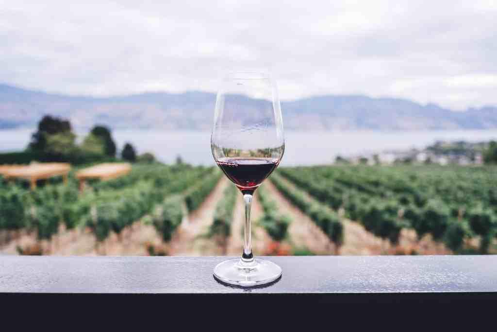 Baja California Wine Tasting