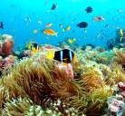 Le Maldive, un paradiso da preservare.