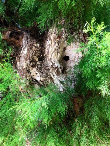 bark and pine