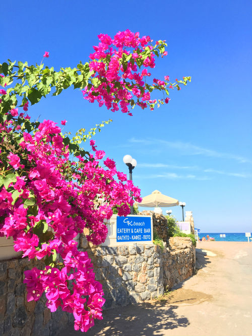 bougainvilla at the beach