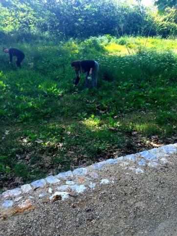 girls picking wild Cretan herbs