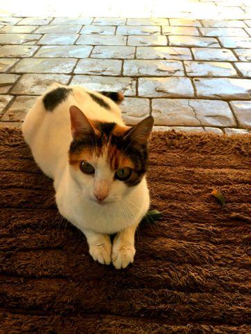 kitty in Topolia Gorge