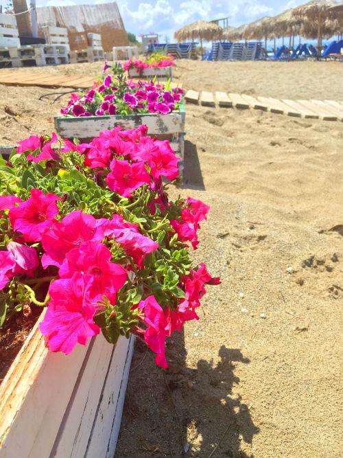 platanias flowers