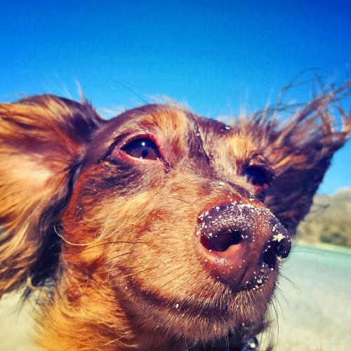 Ringo Vs the Wind