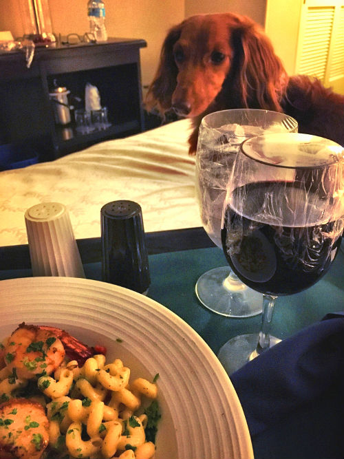 Theodore the mini doxie and room service