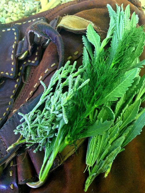 wild cretan herbs: Lavender and Fennel