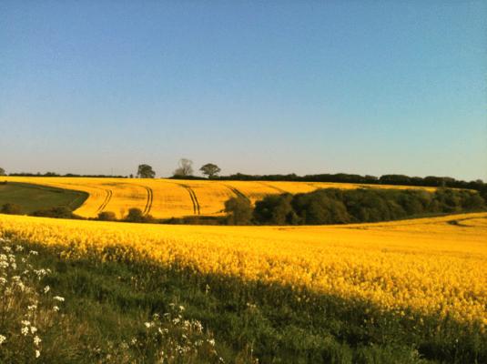 fields-of-downton