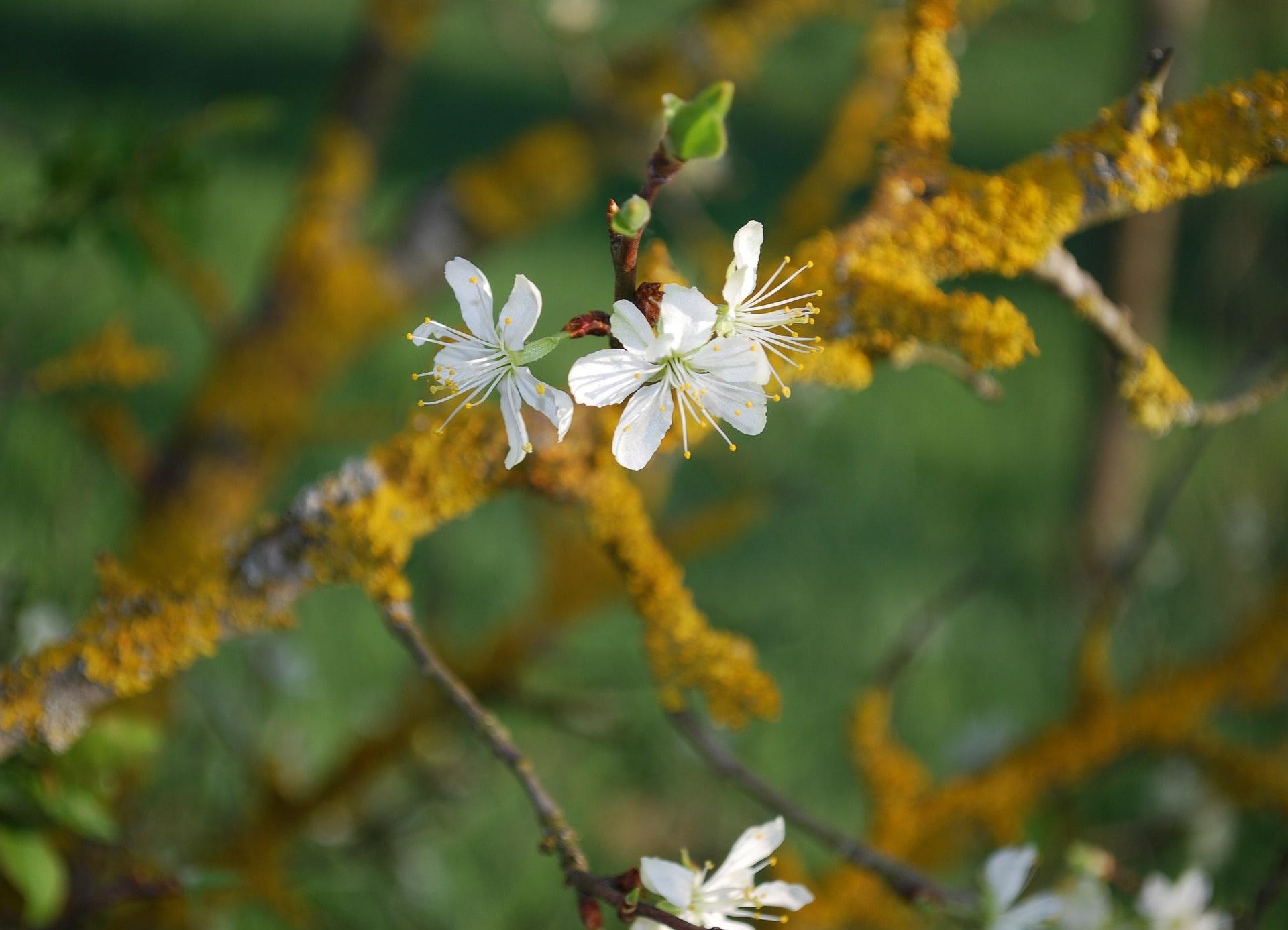 fleur huile essentielle aromathérapie