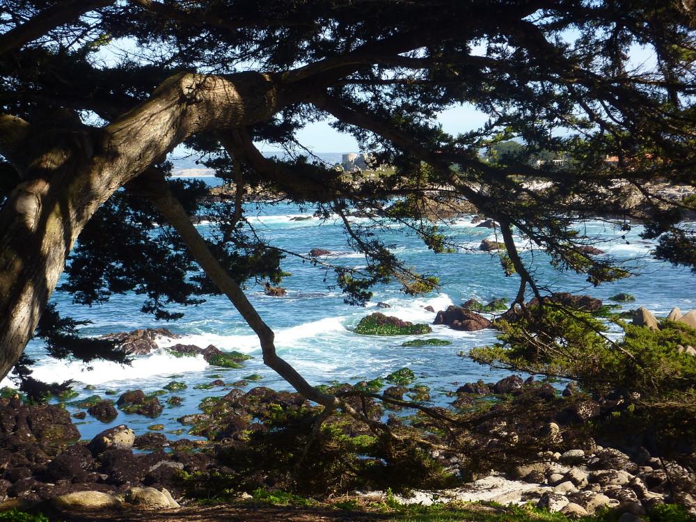 Asilomar trip near Monterey