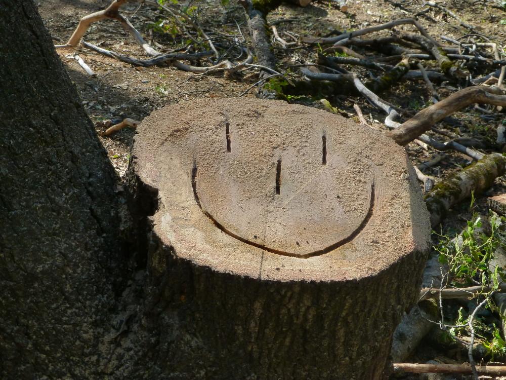 Big Oak Tree Removal