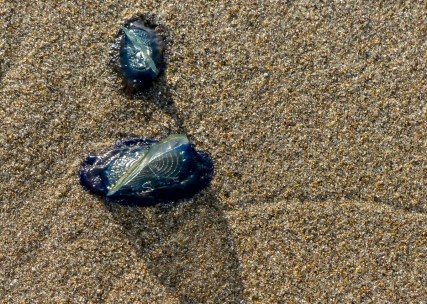 Tiny jelly fish