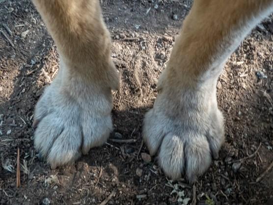 Big feet on ben
