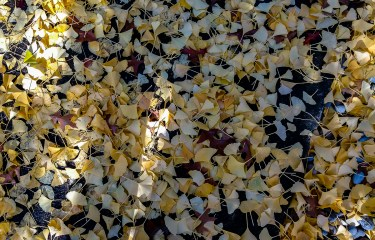 Oregon Autumn Leaves