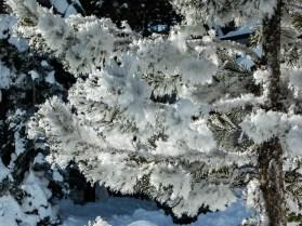 Sierra Snow