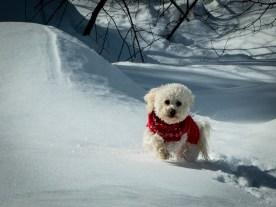 dogs snow play