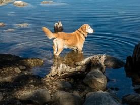 Ben at loon lake