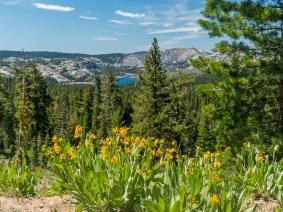 Fordyce lake view