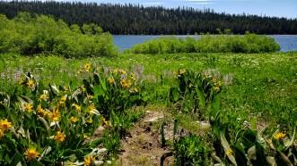 Meadow Lake