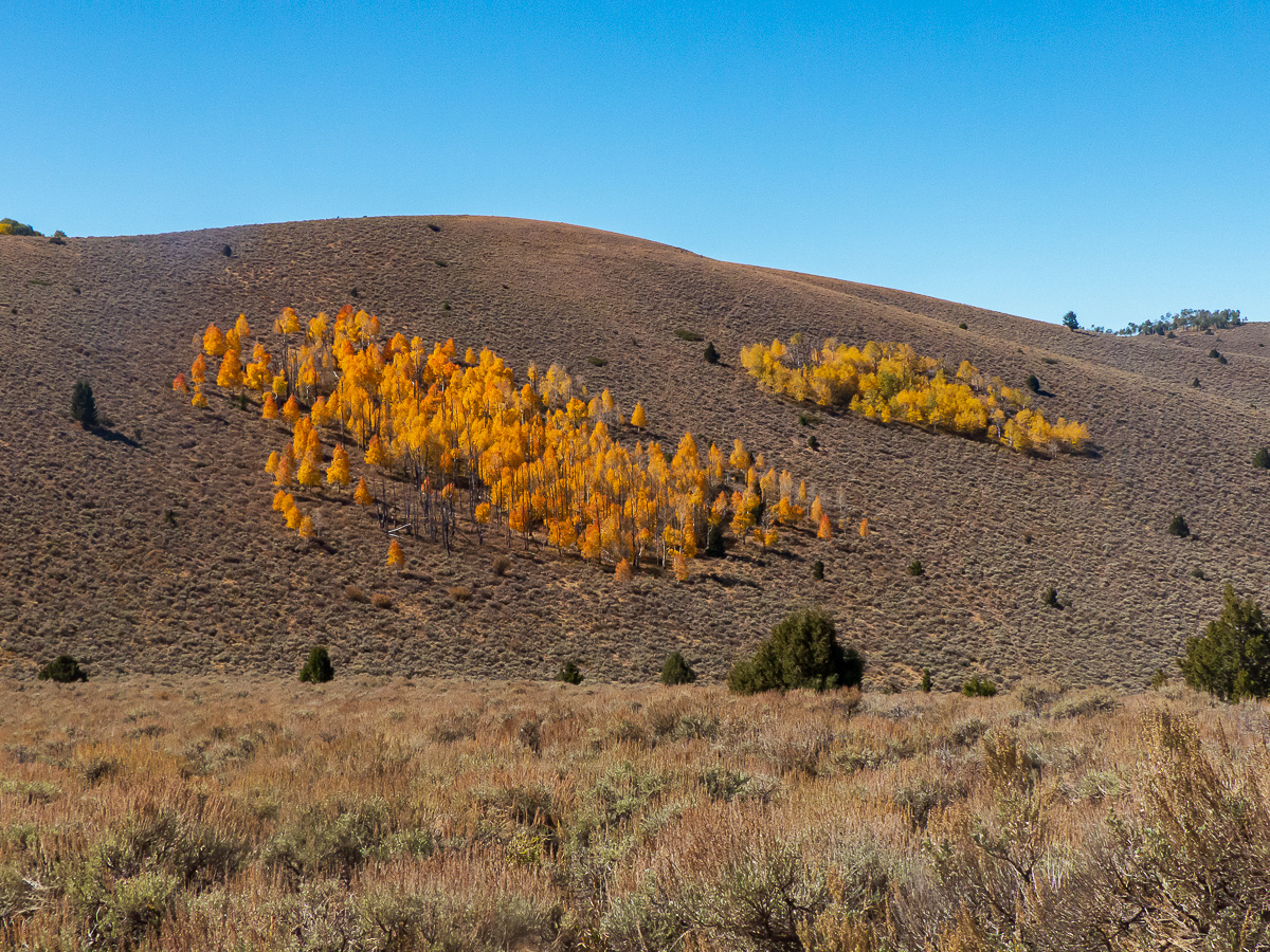 Utah Trip Part 4 – Fishlake National Forest