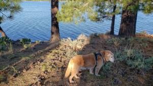 At lake Davis