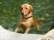 swimming at the Yuba River