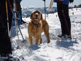 Snow shoe...the more people the better