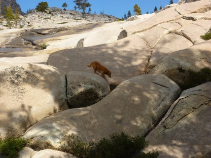 He always was kinda scared of high places. Biggs had already scampered down.