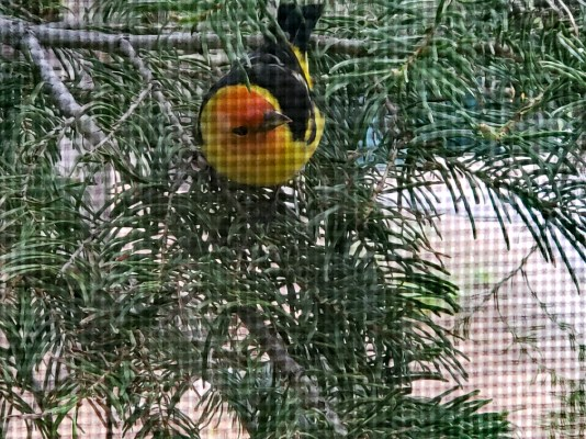While we were staying warm in the RV this little fella came up to my window. Auto focus got the screen unfortunately.