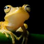 noc-frog1-150x150