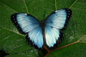 Ecoturismo in Costa Rica: Effetti economici