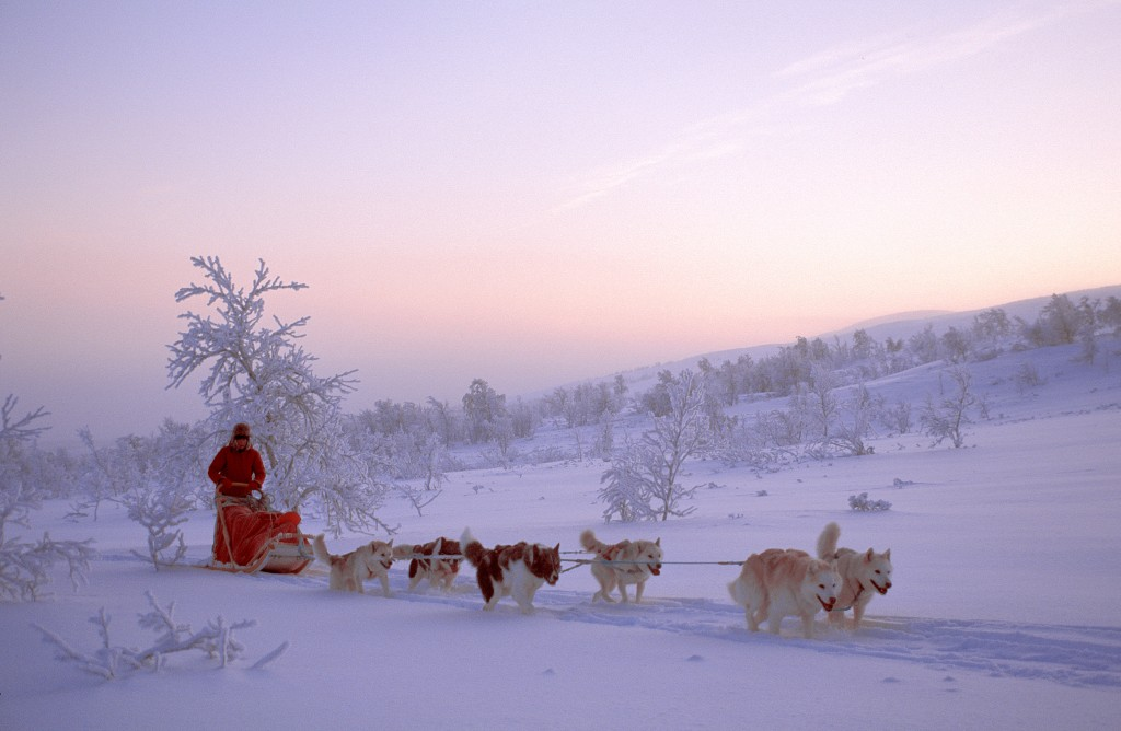 Dogsledding Northern Norway
