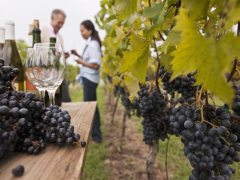 New Zealand's Wine Trail