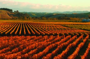 New Zealands Wine Trail