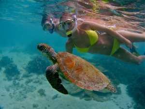 Five Bucket List Adventures -Turtles in Ningaloo
