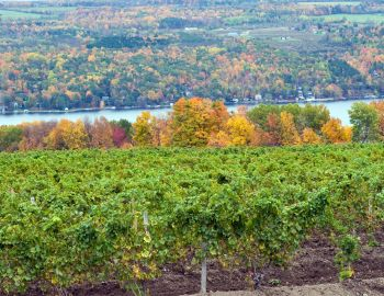 Vineyards of New York State