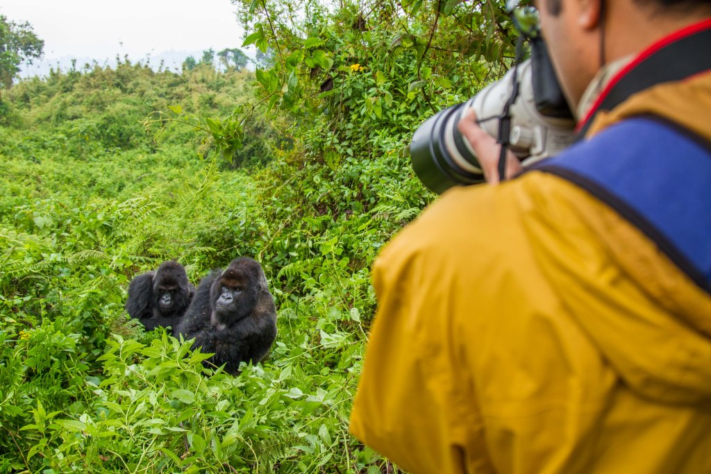 Photographing Mountain Gorillas