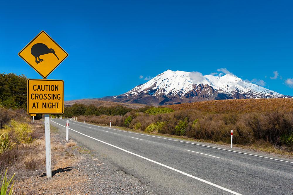 Kiwi and Mount Ruapehu