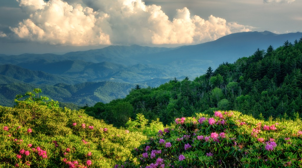 Roan Mountain Carvers Gap with Rhododendron blooming