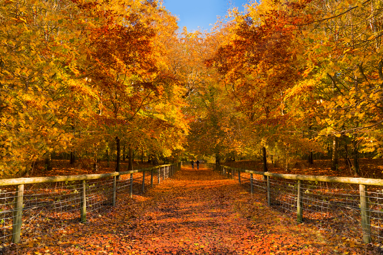 The route through orange and golden trees in the New Forest