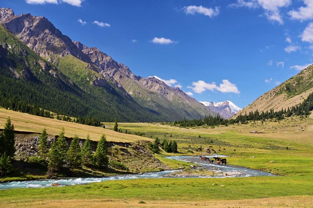 Herd of horses on an Alpine meadow, Tian Shan mountains, Kyrgyzstan