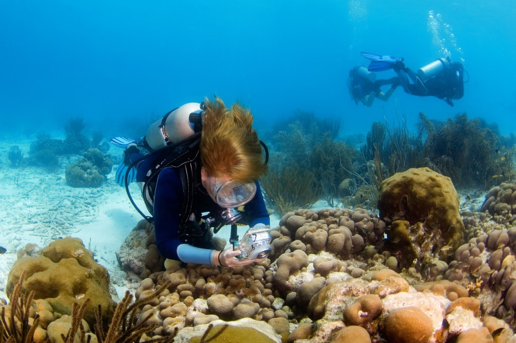 Scuba Diver Photographing the Reef in Bonaire