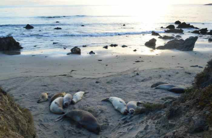 seals california eileen cotter wright