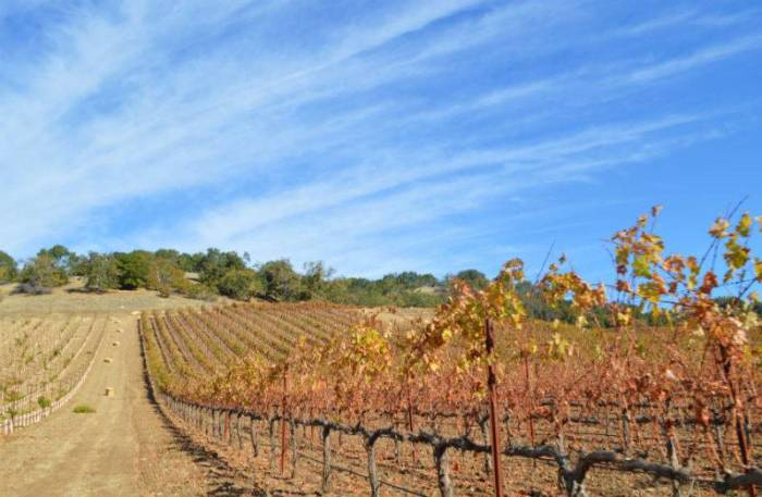 vineyard paso robles california eileen cotter wright