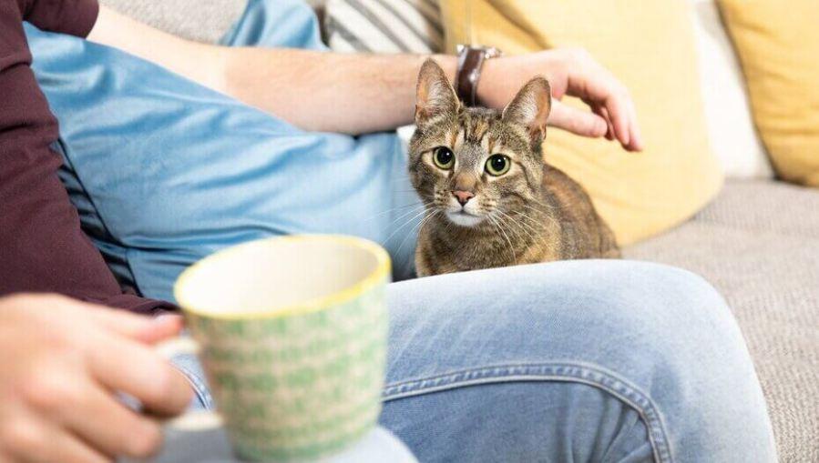 pemilik minum teh sementara kucing duduk di sampingnya